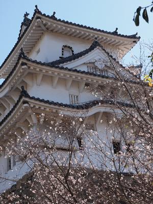 02十月桜と姫路城.jpg