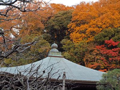 04-8瑞泉寺秋12本堂と紅葉.jpg