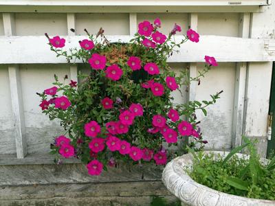 04紫竹ガーデン寄せ植え.jpg