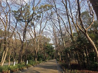 06冬の糺ノ森.jpg