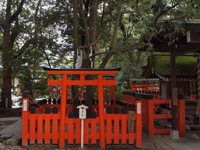 09下鴨神社の連理の枝.jpg