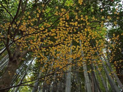 09報国寺紅葉と竹.jpg