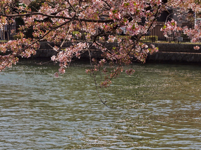 09岡崎琵琶湖疏水桜並木.jpg