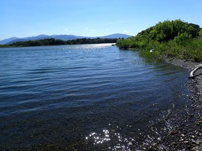 13安曇川河口の水辺.jpg