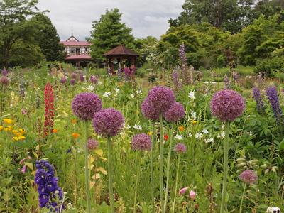 13紫竹ガーデンネギ坊主.jpg