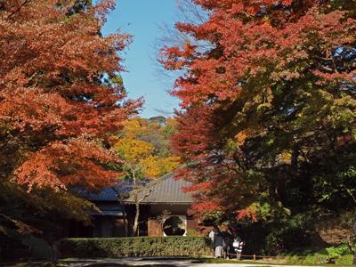 14明月院後庭園本堂紅葉.jpg