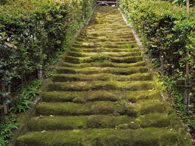 14杉本寺苔の階段2.jpg