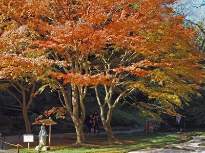 15明月院後庭園紅葉.jpg