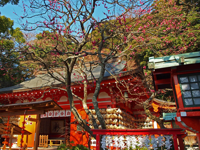 16荏柄天神社紅梅咲く.jpg