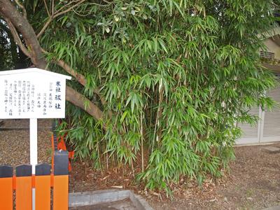 18下鴨神社の竹.jpg