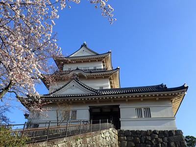 01小田原城とサクラ.jpg