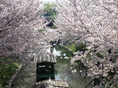 03伏見の桜・京阪電車.jpg