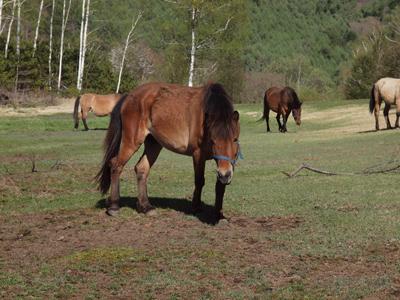 03木曽馬.jpg