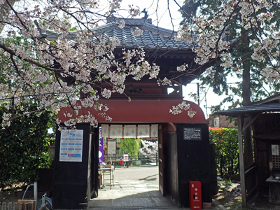 04長建寺・山門の桜.jpg