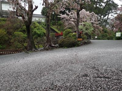 11散り桜.jpg
