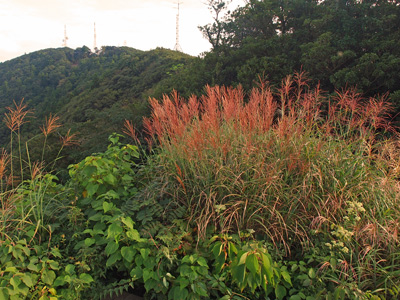 11焼火山展望台夕陽を浴びて.jpg