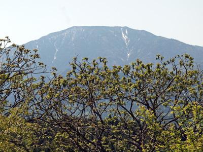 13恵那山とオニグルミの花.jpg