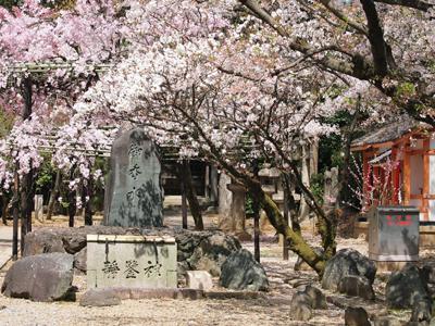 14御香宮・桜の花園.jpg